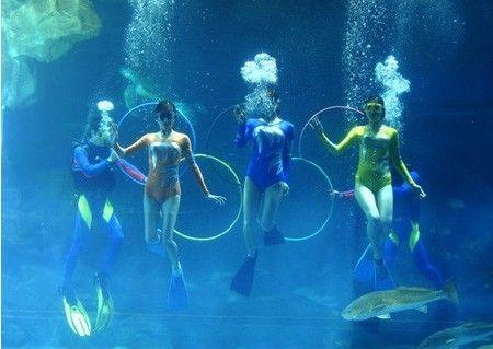 钻到海底看世界   青岛海底世界位于青岛汇泉湾畔,毗邻青岛著名风景区